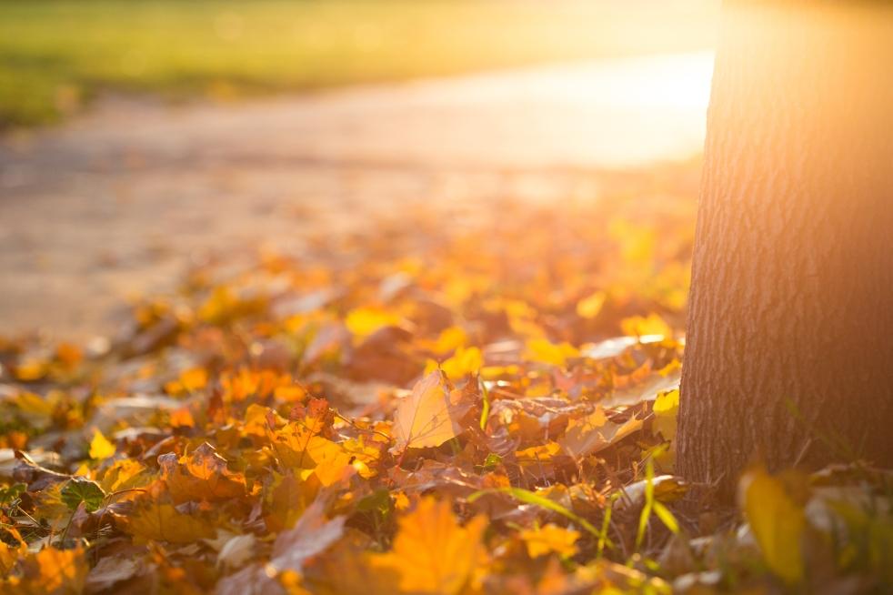fall-autumn-leaves-on-the-ground-picjumbo-com